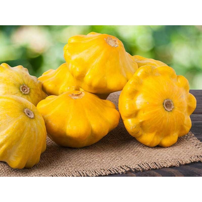 Patisonai Daigai  Patisson Orange Sodinukai