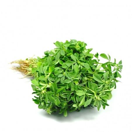 Vaistinės Ožragės - vaz