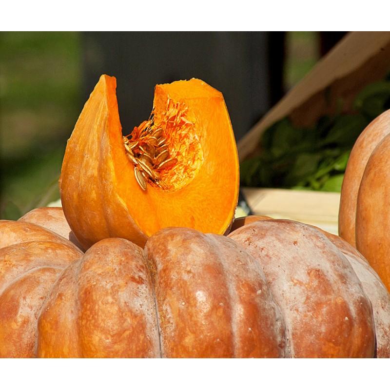 Didieji Moliūgai Muscade De Provence Daigai Sodinukai